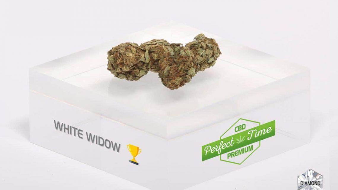 Le white widow, un cbd à consommer